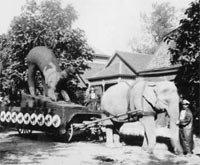 Elephant pulling float bearing oversized cat figure